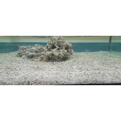 ARENA DE CORAL 1 kg ( 1 - 3 CM )