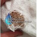 ARENA DE CORAL 1 kg ( 0,3 - 0,5 CM )