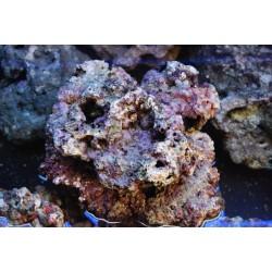 Roca Viva indonesia ( 1 kg )