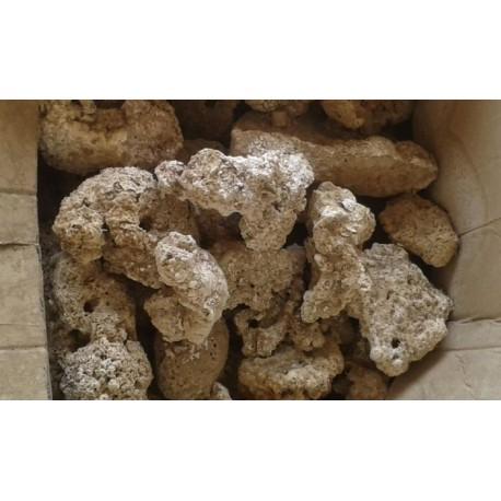 Roca Muerta indonesia ( 1 kg )